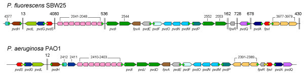 http://static-content.springer.com/image/art%3A10.1186%2F1471-2180-8-7/MediaObjects/12866_2007_Article_440_Fig1_HTML.jpg