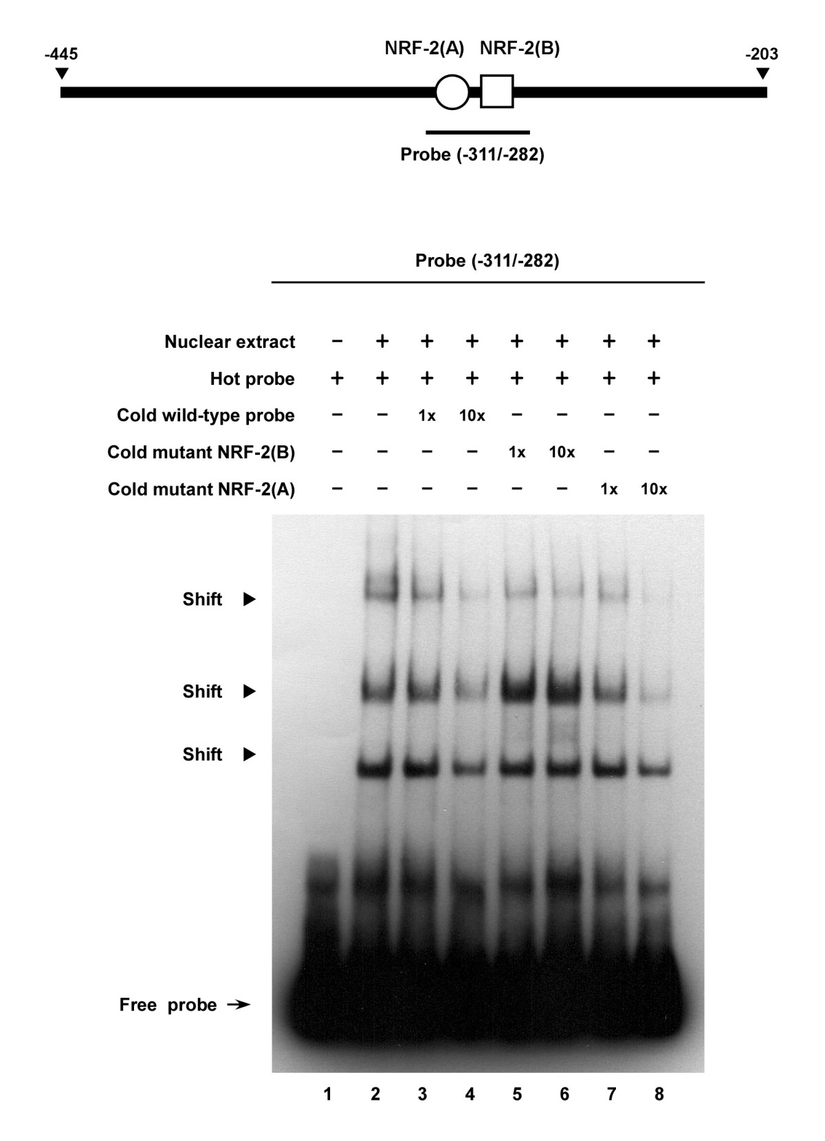 http://static-content.springer.com/image/art%3A10.1186%2F1471-2199-10-67/MediaObjects/12867_2008_Article_435_Fig7_HTML.jpg