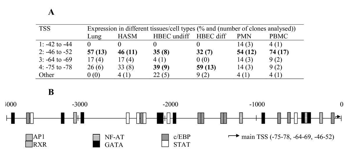 http://static-content.springer.com/image/art%3A10.1186%2F1471-2199-10-75/MediaObjects/12867_2008_Article_443_Fig2_HTML.jpg