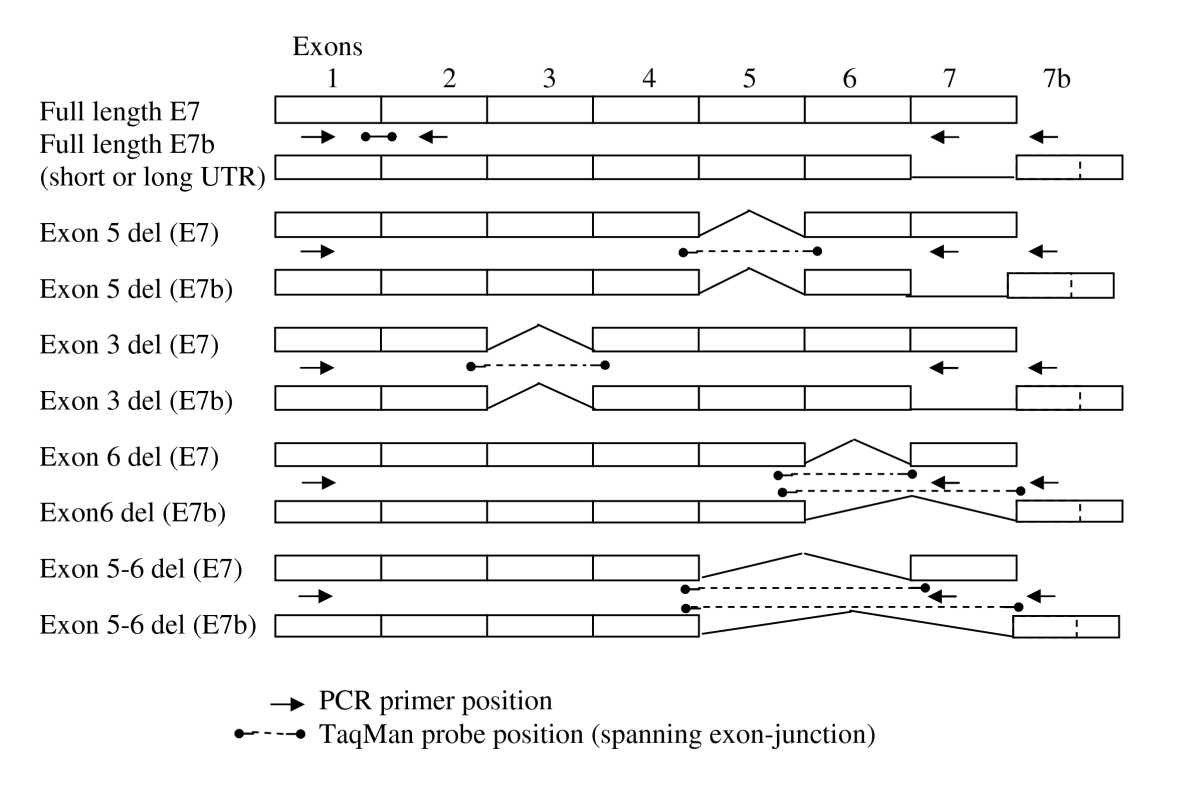 http://static-content.springer.com/image/art%3A10.1186%2F1471-2199-10-75/MediaObjects/12867_2008_Article_443_Fig6_HTML.jpg