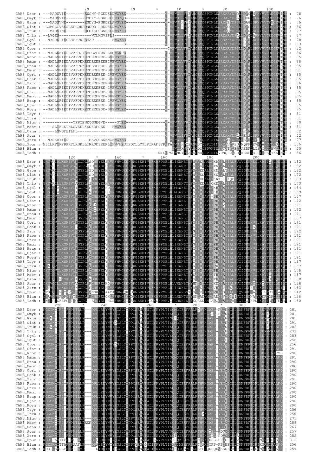http://static-content.springer.com/image/art%3A10.1186%2F1471-2199-11-25/MediaObjects/12867_2009_Article_506_Fig1_HTML.jpg