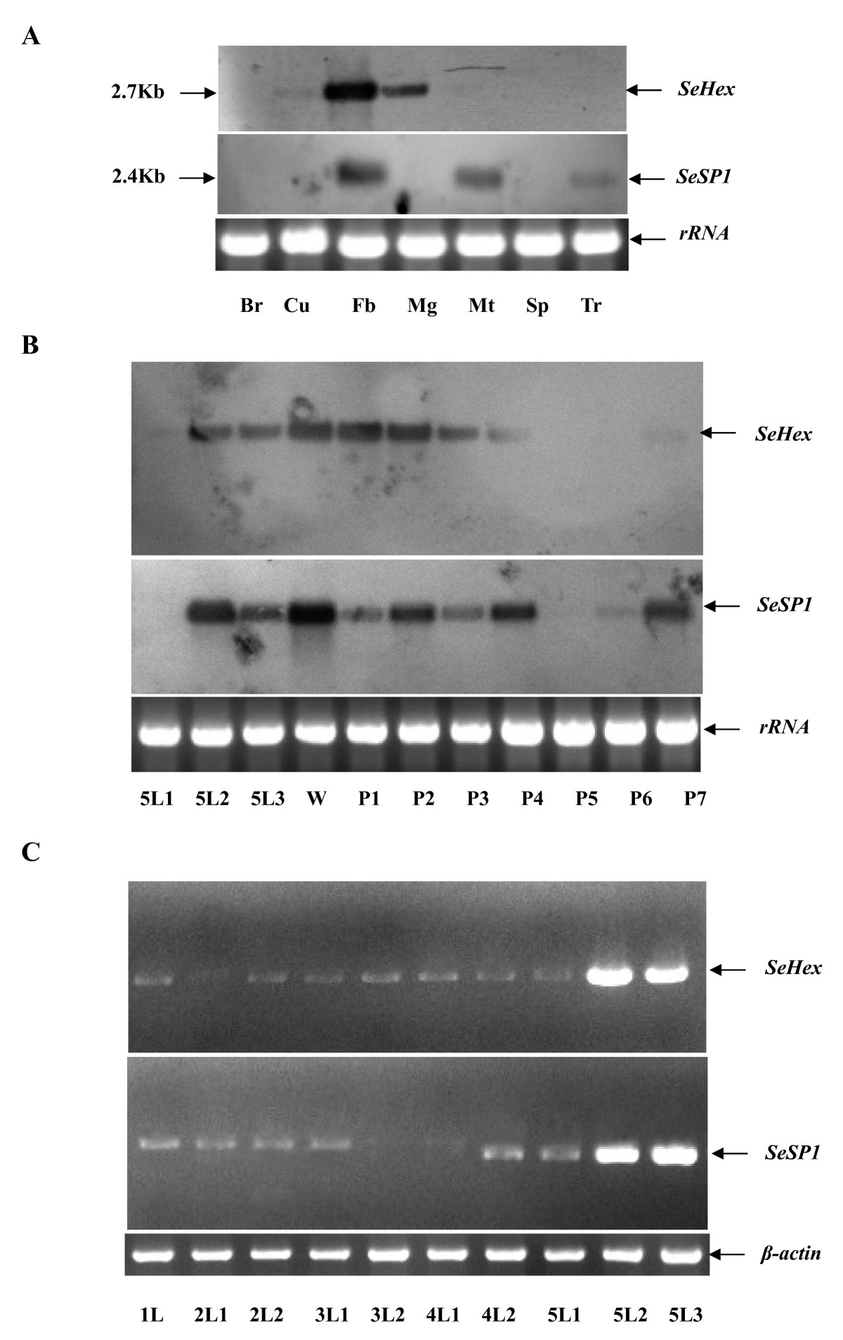 http://static-content.springer.com/image/art%3A10.1186%2F1471-2199-11-65/MediaObjects/12867_2009_Article_546_Fig3_HTML.jpg