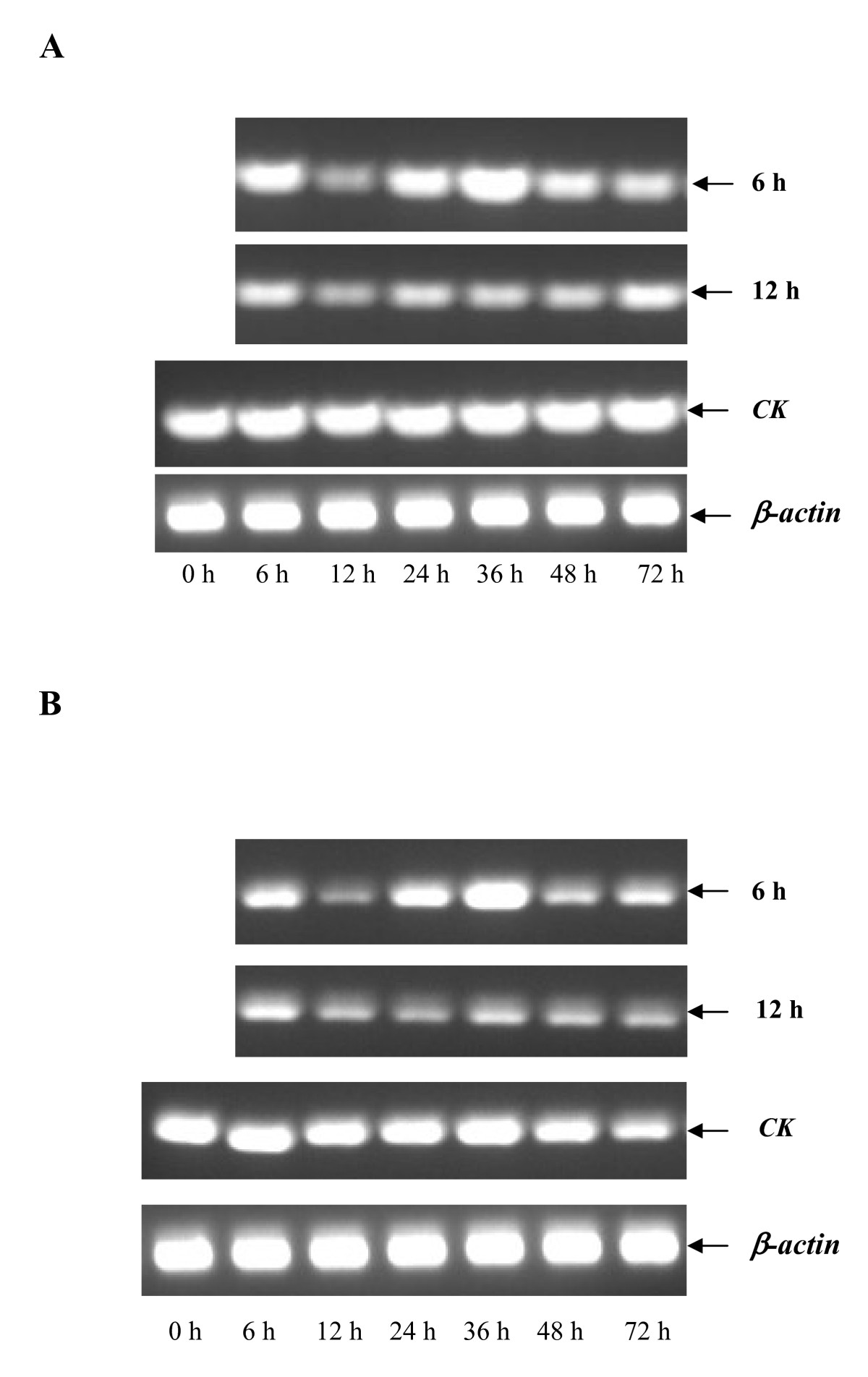 http://static-content.springer.com/image/art%3A10.1186%2F1471-2199-11-65/MediaObjects/12867_2009_Article_546_Fig4_HTML.jpg