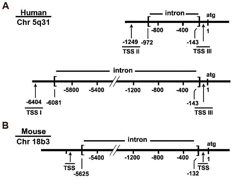 http://static-content.springer.com/image/art%3A10.1186%2F1471-2199-11-81/MediaObjects/12867_2010_Article_567_Fig1_HTML.jpg
