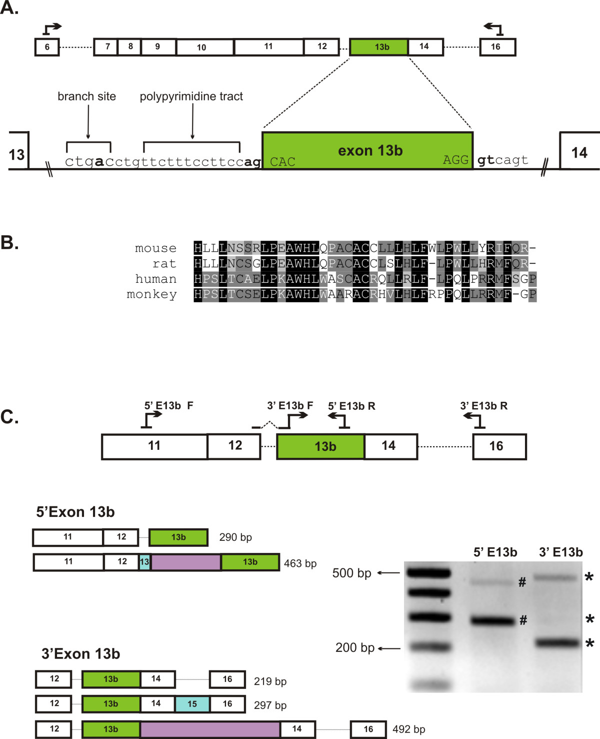 http://static-content.springer.com/image/art%3A10.1186%2F1471-2199-12-35/MediaObjects/12867_2011_Article_589_Fig4_HTML.jpg