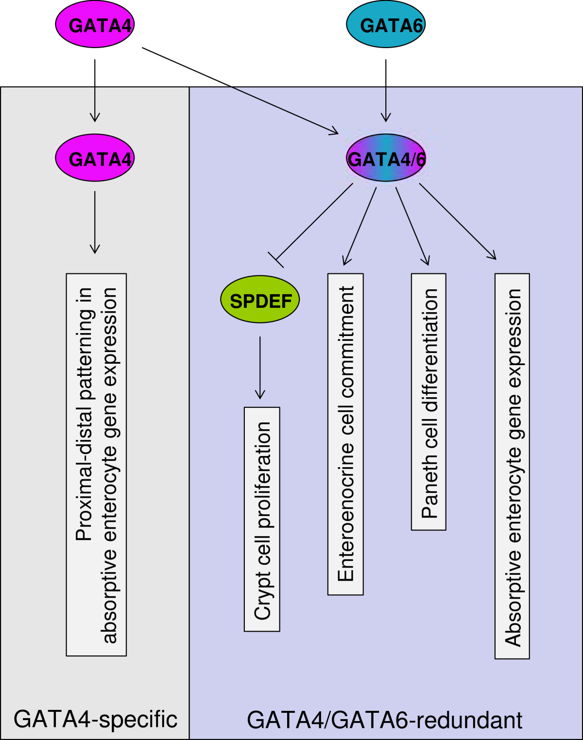 http://static-content.springer.com/image/art%3A10.1186%2F1471-2199-15-3/MediaObjects/12867_2013_Article_676_Fig7_HTML.jpg