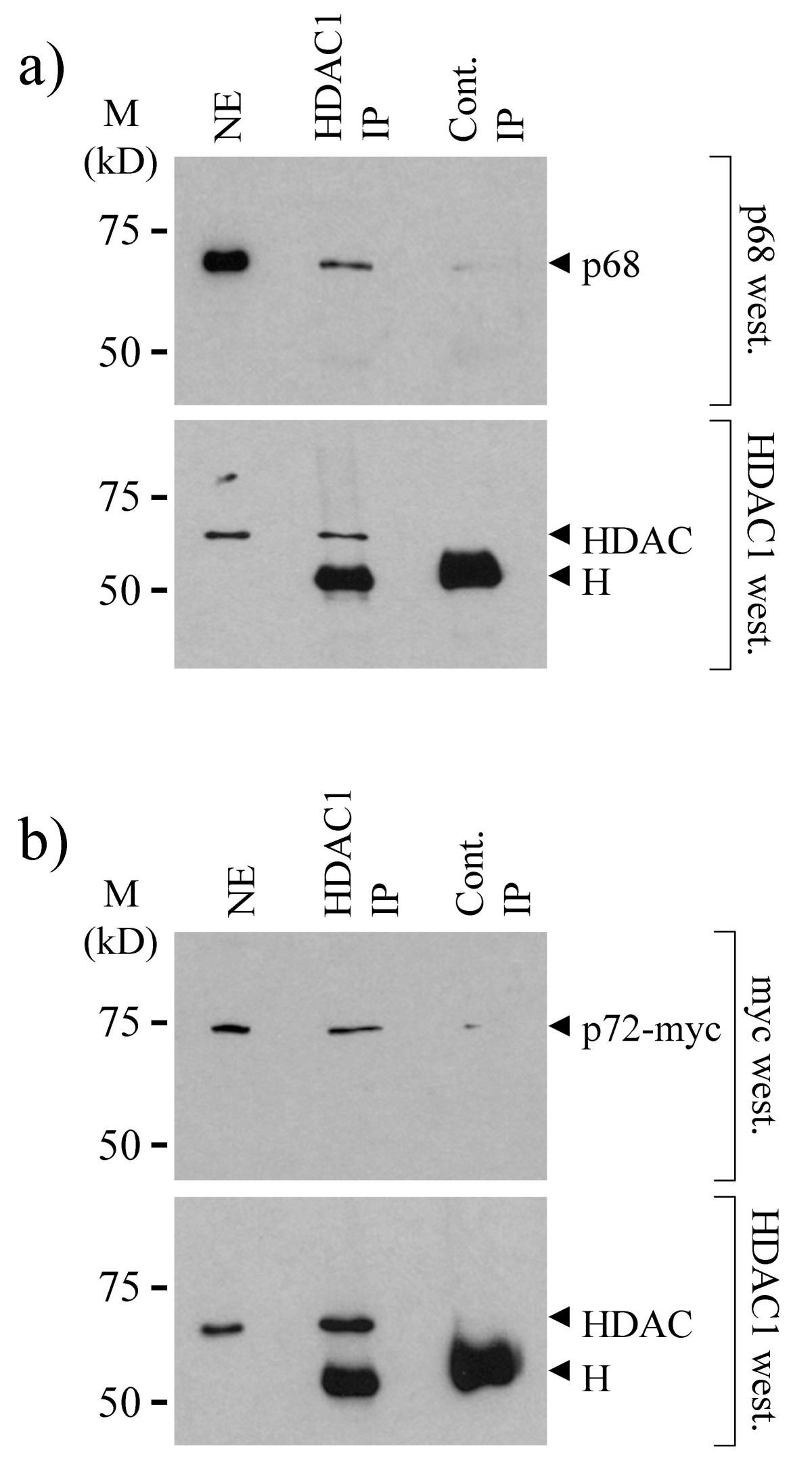 http://static-content.springer.com/image/art%3A10.1186%2F1471-2199-5-11/MediaObjects/12867_2004_Article_56_Fig6_HTML.jpg