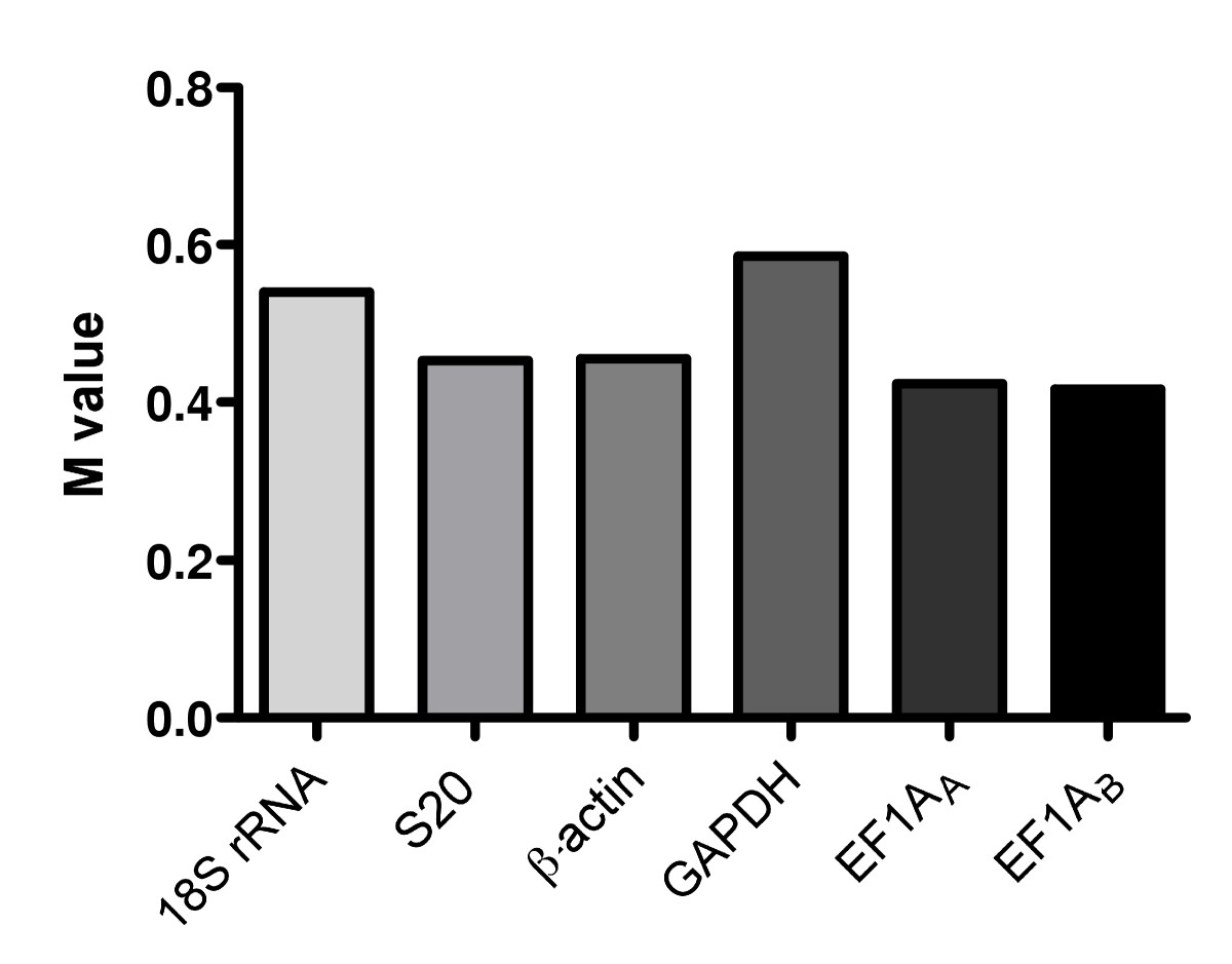 http://static-content.springer.com/image/art%3A10.1186%2F1471-2199-6-21/MediaObjects/12867_2005_Article_88_Fig3_HTML.jpg