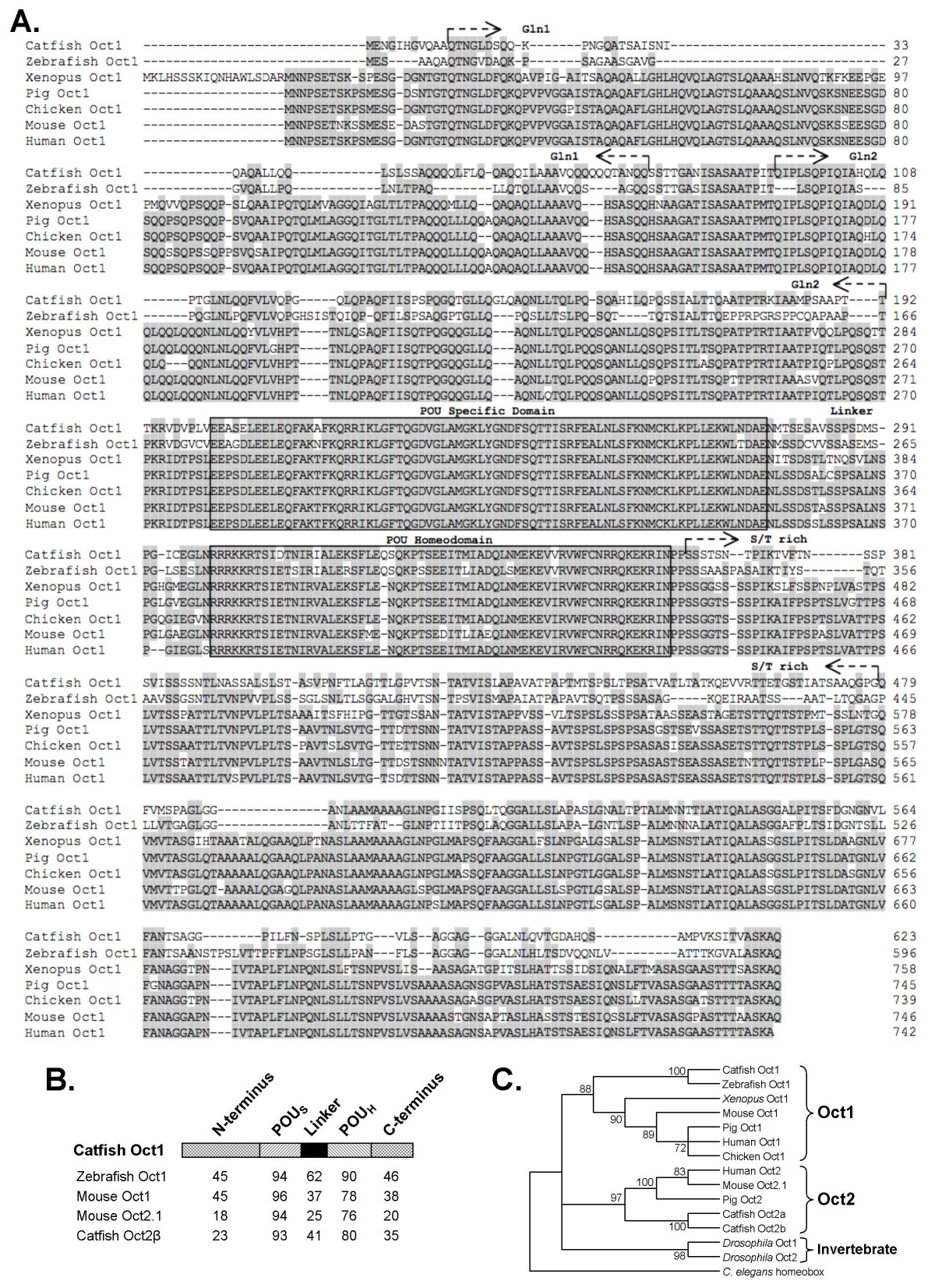 http://static-content.springer.com/image/art%3A10.1186%2F1471-2199-8-8/MediaObjects/12867_2006_Article_145_Fig1_HTML.jpg
