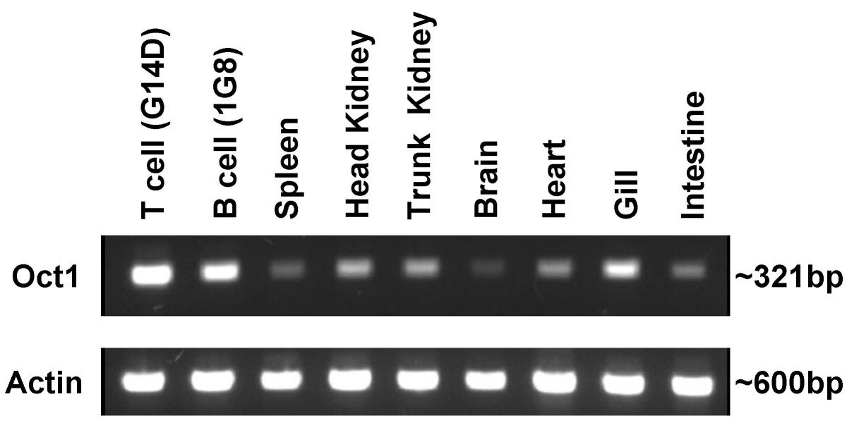 http://static-content.springer.com/image/art%3A10.1186%2F1471-2199-8-8/MediaObjects/12867_2006_Article_145_Fig2_HTML.jpg