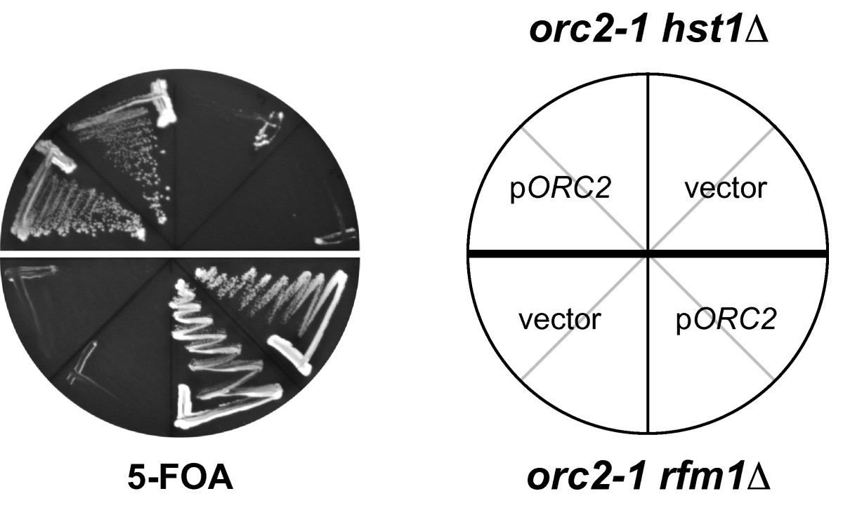 http://static-content.springer.com/image/art%3A10.1186%2F1471-2199-9-100/MediaObjects/12867_2008_Article_357_Fig1_HTML.jpg