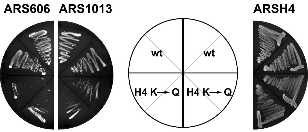 http://static-content.springer.com/image/art%3A10.1186%2F1471-2199-9-100/MediaObjects/12867_2008_Article_357_Fig4_HTML.jpg