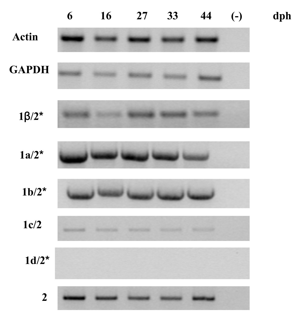 http://static-content.springer.com/image/art%3A10.1186%2F1471-2202-11-4/MediaObjects/12868_2009_Article_1563_Fig5_HTML.jpg
