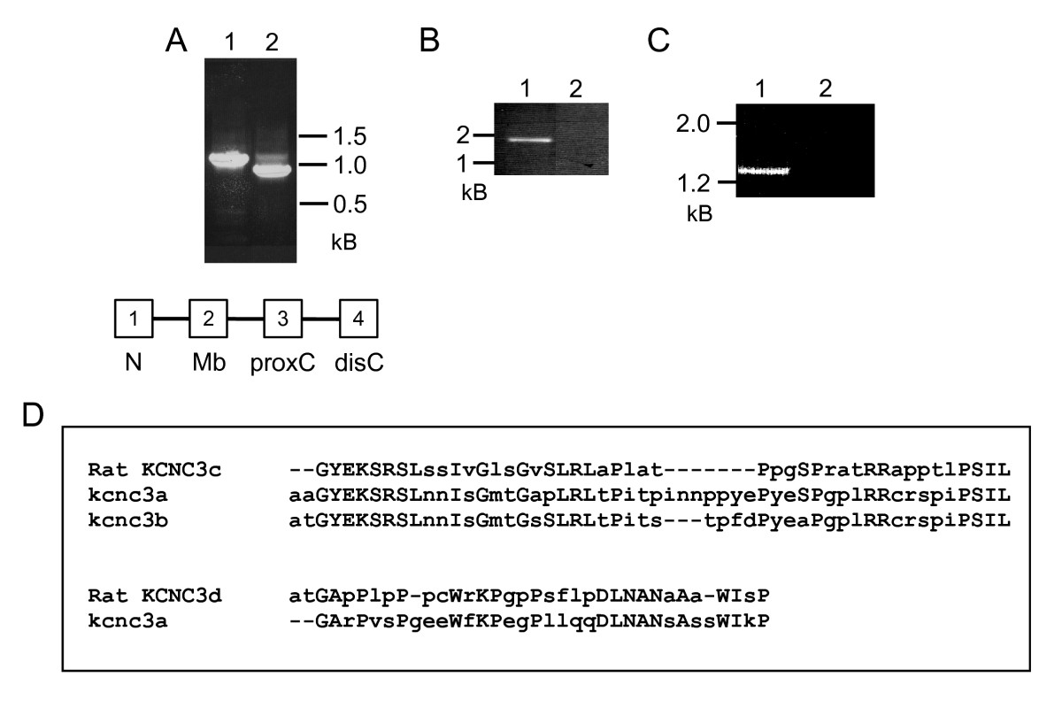 http://static-content.springer.com/image/art%3A10.1186%2F1471-2202-11-99/MediaObjects/12868_2010_Article_1658_Fig4_HTML.jpg