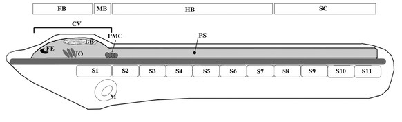 http://static-content.springer.com/image/art%3A10.1186%2F1471-2202-13-59/MediaObjects/12868_2011_2784_Fig1_HTML.jpg