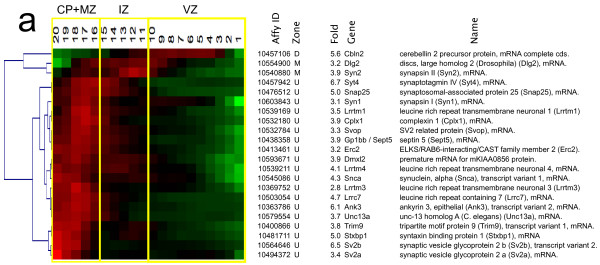 http://static-content.springer.com/image/art%3A10.1186%2F1471-2202-13-90/MediaObjects/12868_2012_2829_Fig7_HTML.jpg