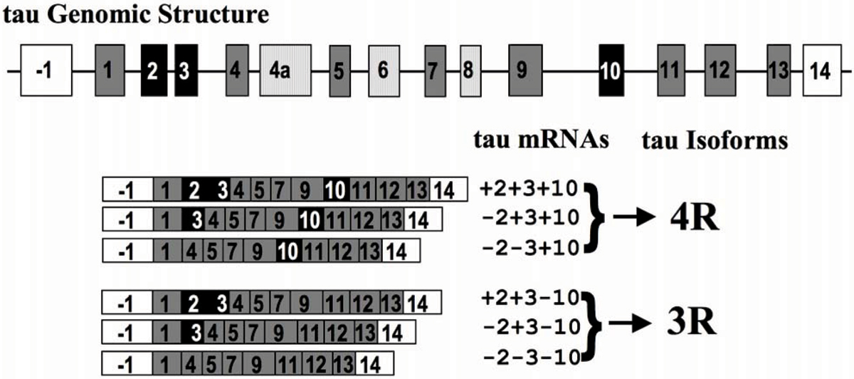http://static-content.springer.com/image/art%3A10.1186%2F1471-2202-9-S2-S10/MediaObjects/12868_2008_Article_991_Fig1_HTML.jpg