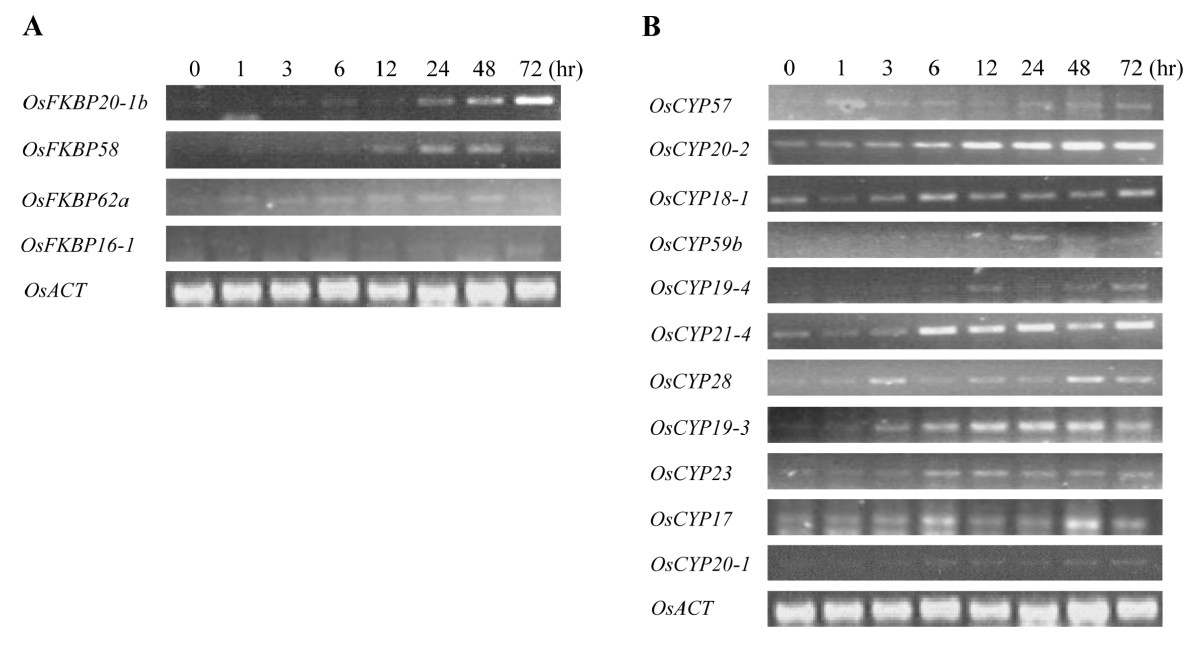 http://static-content.springer.com/image/art%3A10.1186%2F1471-2229-10-253/MediaObjects/12870_2010_Article_747_Fig7_HTML.jpg