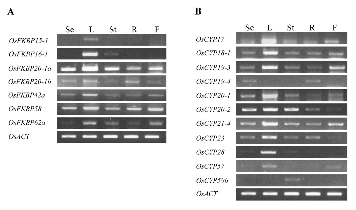 http://static-content.springer.com/image/art%3A10.1186%2F1471-2229-10-253/MediaObjects/12870_2010_Article_747_Fig9_HTML.jpg