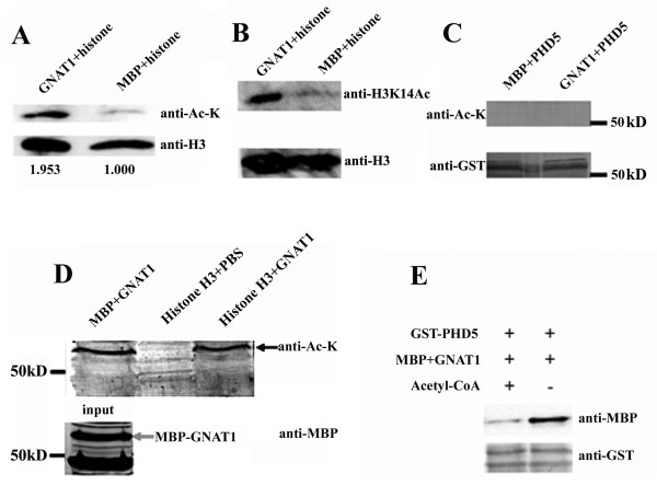 http://static-content.springer.com/image/art%3A10.1186%2F1471-2229-11-178/MediaObjects/12870_2011_973_Fig5_HTML.jpg