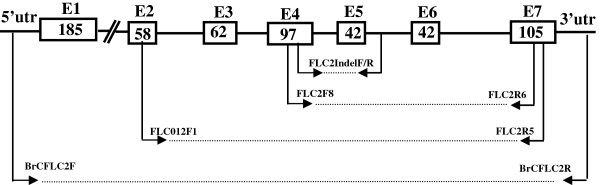 http://static-content.springer.com/image/art%3A10.1186%2F1471-2229-12-151/MediaObjects/12870_2012_1098_Fig1_HTML.jpg