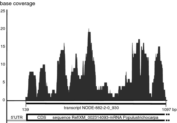 http://static-content.springer.com/image/art%3A10.1186%2F1471-2229-12-168/MediaObjects/12870_2012_1095_Fig4_HTML.jpg