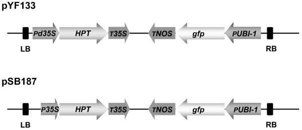 http://static-content.springer.com/image/art%3A10.1186%2F1471-2229-12-171/MediaObjects/12870_2012_1140_Fig7_HTML.jpg