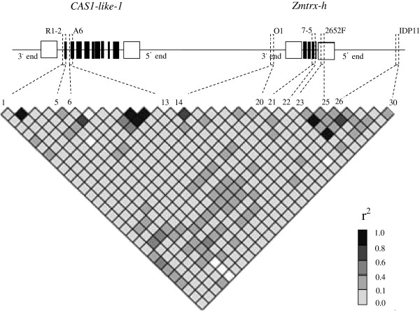 http://static-content.springer.com/image/art%3A10.1186%2F1471-2229-13-162/MediaObjects/12870_2013_1372_Fig4_HTML.jpg