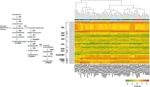 http://static-content.springer.com/image/art%3A10.1186%2F1471-2229-14-35/MediaObjects/12870_2013_1462_Fig10_HTML.jpg