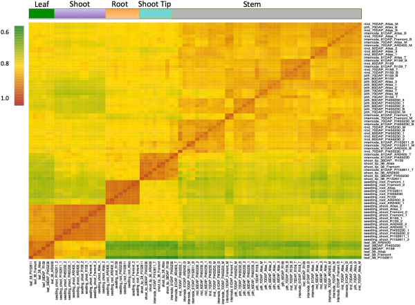 http://static-content.springer.com/image/art%3A10.1186%2F1471-2229-14-35/MediaObjects/12870_2013_1462_Fig1_HTML.jpg