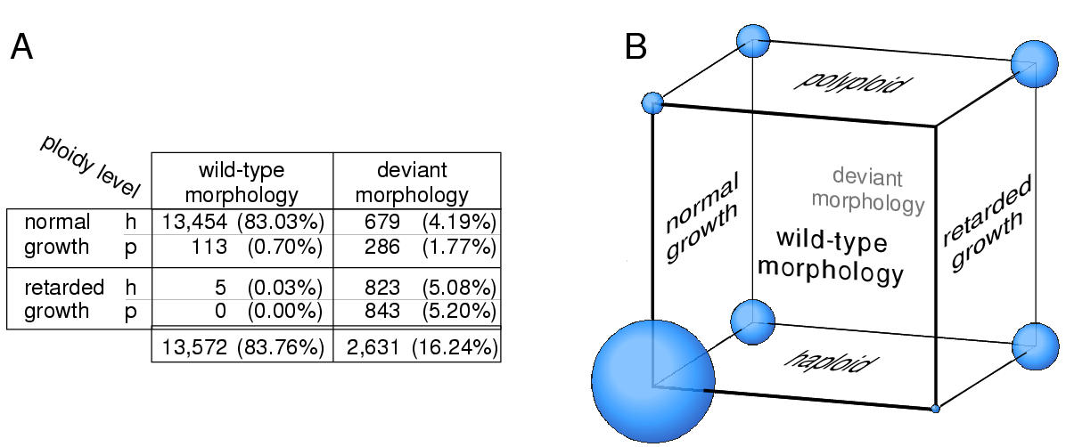 http://static-content.springer.com/image/art%3A10.1186%2F1471-2229-2-6/MediaObjects/12870_2002_Article_9_Fig5_HTML.jpg