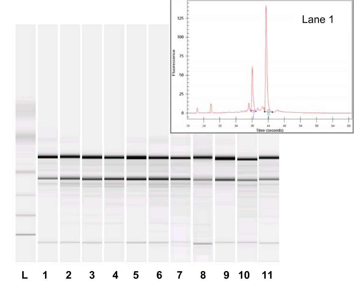http://static-content.springer.com/image/art%3A10.1186%2F1471-2229-6-27/MediaObjects/12870_2006_Article_135_Fig5_HTML.jpg