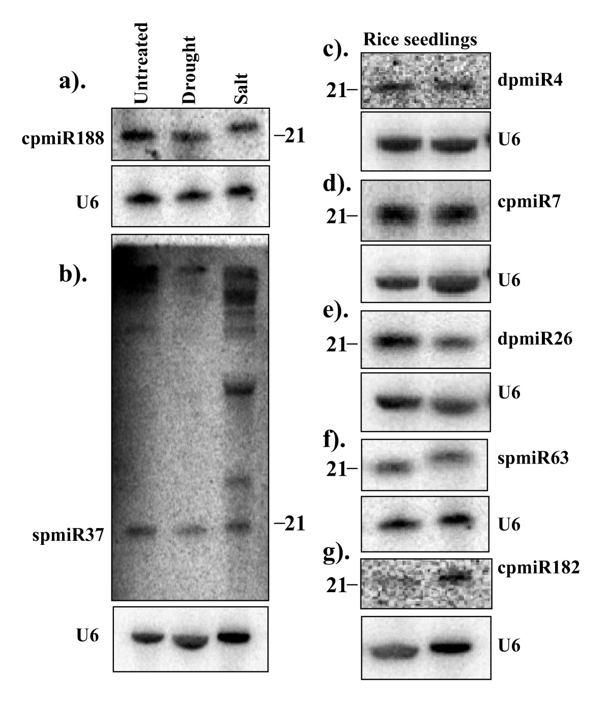 http://static-content.springer.com/image/art%3A10.1186%2F1471-2229-8-25/MediaObjects/12870_2008_Article_233_Fig4_HTML.jpg