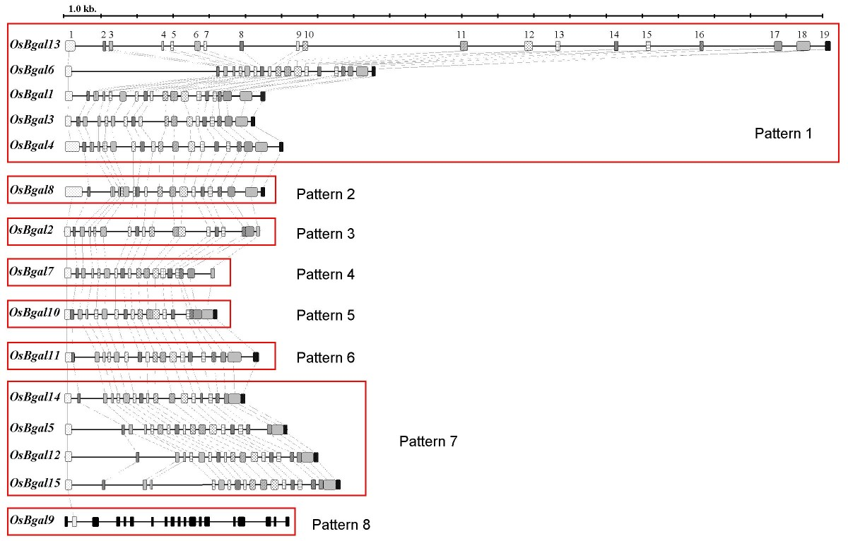 http://static-content.springer.com/image/art%3A10.1186%2F1471-2229-8-84/MediaObjects/12870_2008_Article_292_Fig3_HTML.jpg