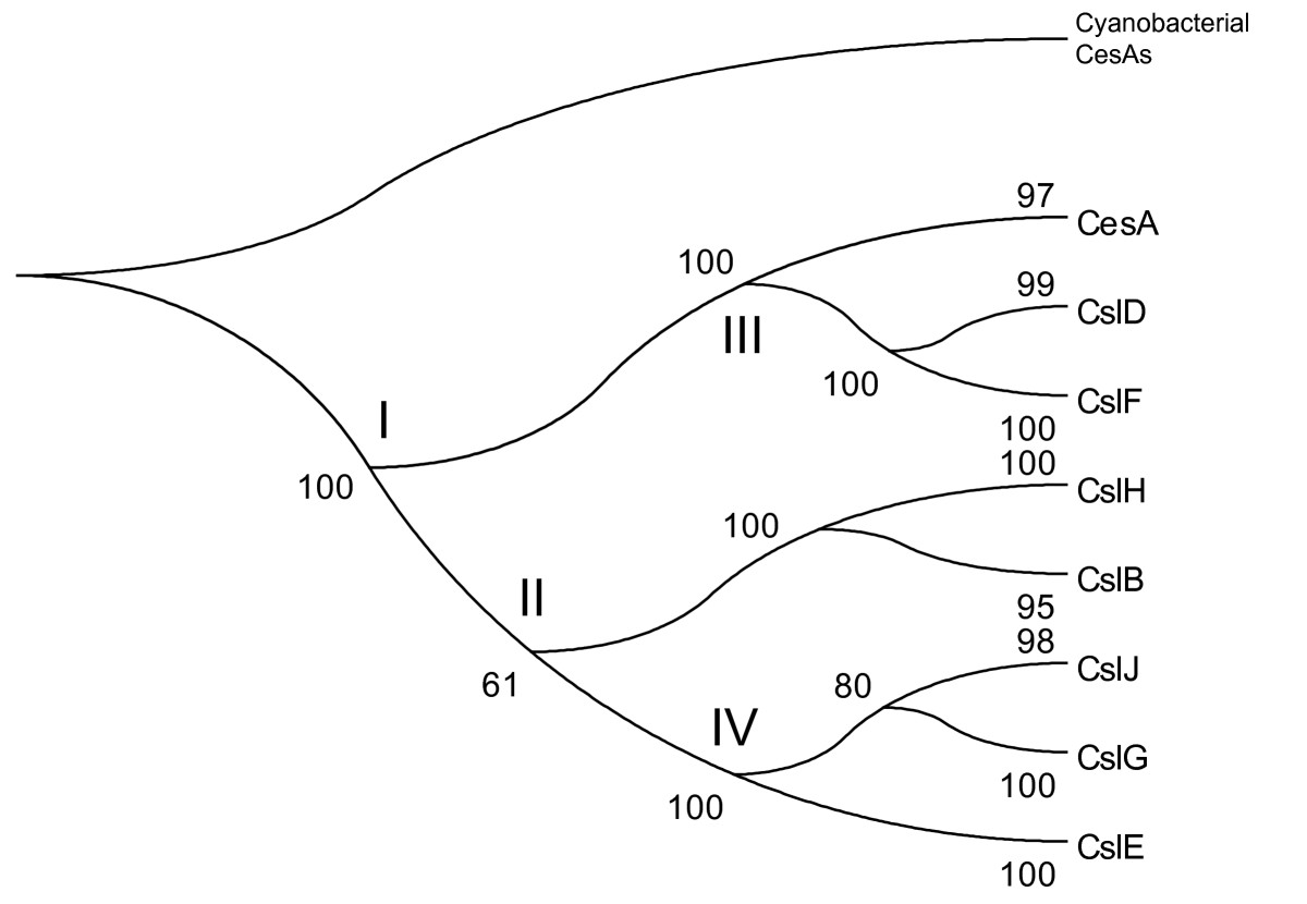 http://static-content.springer.com/image/art%3A10.1186%2F1471-2229-9-99/MediaObjects/12870_2009_Article_441_Fig6_HTML.jpg