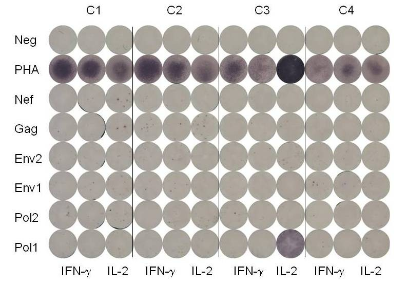 http://static-content.springer.com/image/art%3A10.1186%2F1471-2334-10-129/MediaObjects/12879_2009_Article_1109_Fig1_HTML.jpg