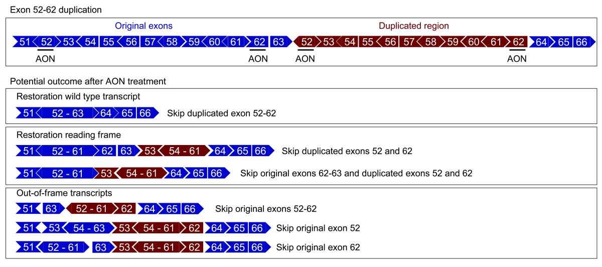 http://static-content.springer.com/image/art%3A10.1186%2F1471-2350-8-43/MediaObjects/12881_2007_Article_237_Fig4_HTML.jpg