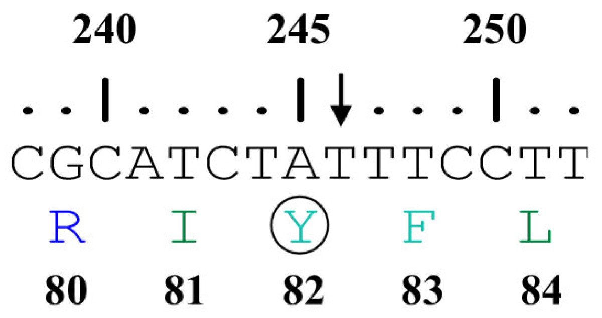 http://static-content.springer.com/image/art%3A10.1186%2F1471-2350-8-58/MediaObjects/12881_2007_Article_252_Fig4_HTML.jpg