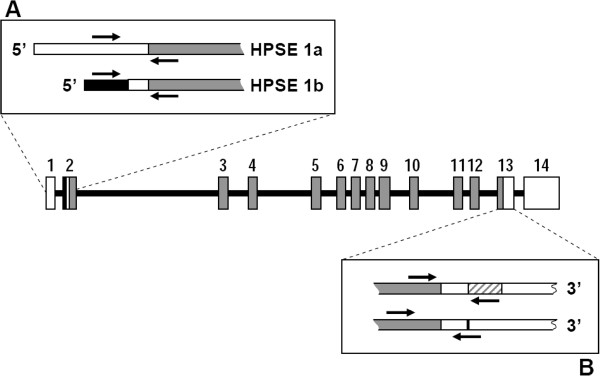 http://static-content.springer.com/image/art%3A10.1186%2F1471-2407-13-24/MediaObjects/12885_2012_3629_Fig7_HTML.jpg