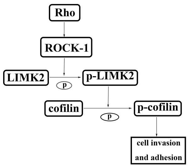 http://static-content.springer.com/image/art%3A10.1186%2F1471-2407-14-89/MediaObjects/12885_2013_4320_Fig7_HTML.jpg