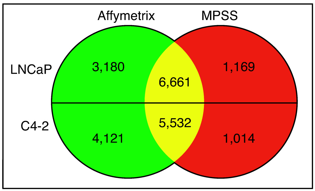 http://static-content.springer.com/image/art%3A10.1186%2F1471-2407-5-86/MediaObjects/12885_2005_Article_274_Fig1_HTML.jpg