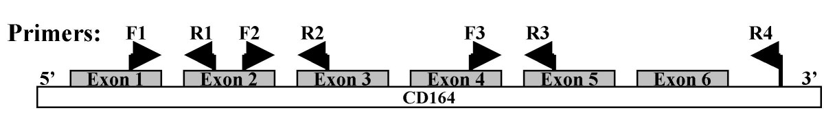 http://static-content.springer.com/image/art%3A10.1186%2F1471-2407-6-195/MediaObjects/12885_2006_Article_547_Fig1_HTML.jpg