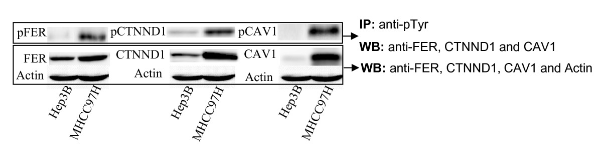 http://static-content.springer.com/image/art%3A10.1186%2F1471-2407-9-366/MediaObjects/12885_2009_Article_1700_Fig7_HTML.jpg