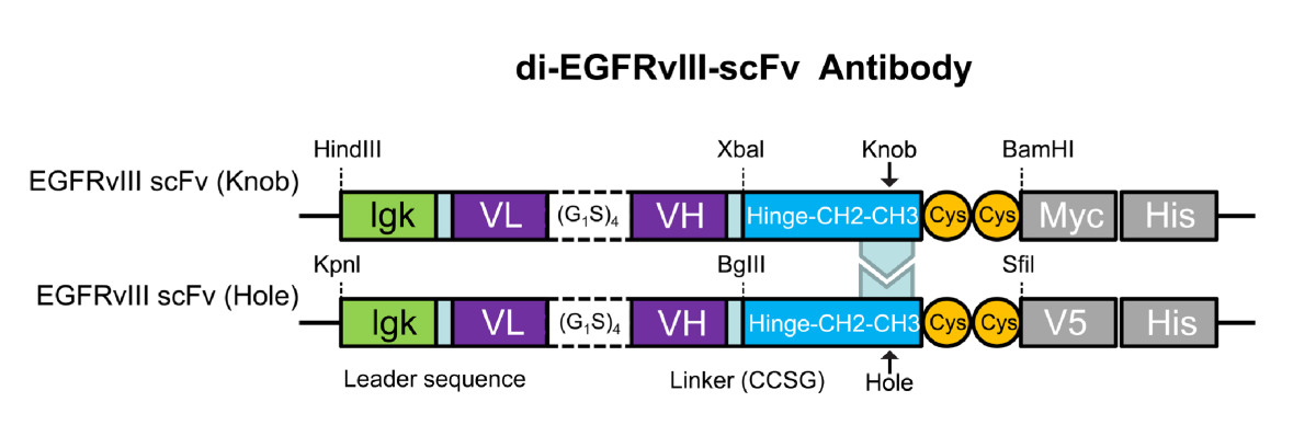 http://static-content.springer.com/image/art%3A10.1186%2F1472-6750-10-72/MediaObjects/12896_2010_Article_540_Fig1_HTML.jpg