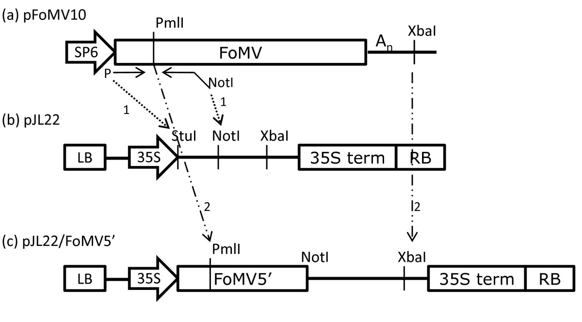 http://static-content.springer.com/image/art%3A10.1186%2F1472-6750-10-88/MediaObjects/12896_2010_Article_556_Fig1_HTML.jpg
