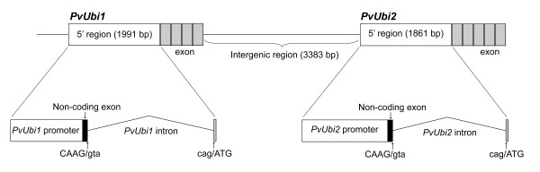 http://static-content.springer.com/image/art%3A10.1186%2F1472-6750-11-74/MediaObjects/12896_2011_637_Fig1_HTML.jpg
