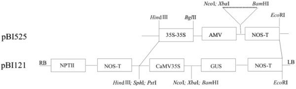 http://static-content.springer.com/image/art%3A10.1186%2F1472-6750-11-96/MediaObjects/12896_2011_661_Fig1_HTML.jpg