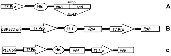 http://static-content.springer.com/image/art%3A10.1186%2F1472-6750-12-58/MediaObjects/12896_2012_747_Fig2_HTML.jpg