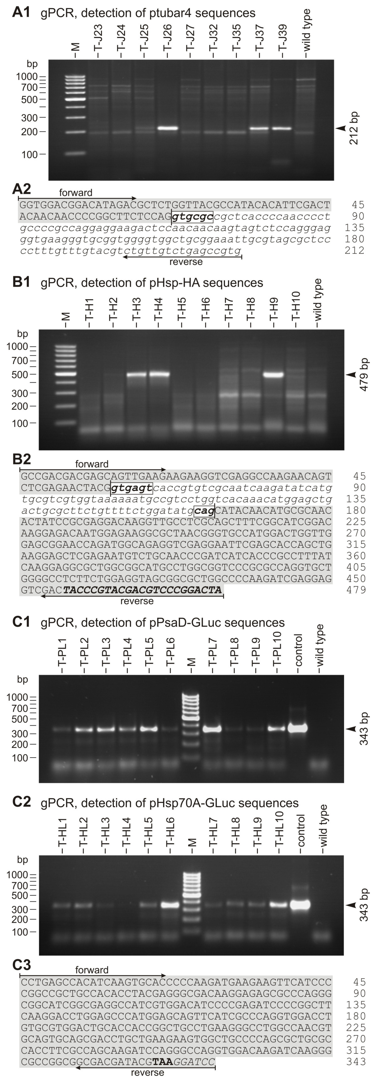 http://static-content.springer.com/image/art%3A10.1186%2F1472-6750-9-64/MediaObjects/12896_2009_Article_430_Fig5_HTML.jpg