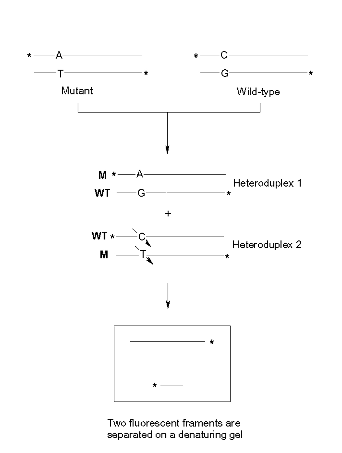 http://static-content.springer.com/image/art%3A10.1186%2F1472-6769-3-1/MediaObjects/12897_2003_Article_6_Fig1_HTML.jpg